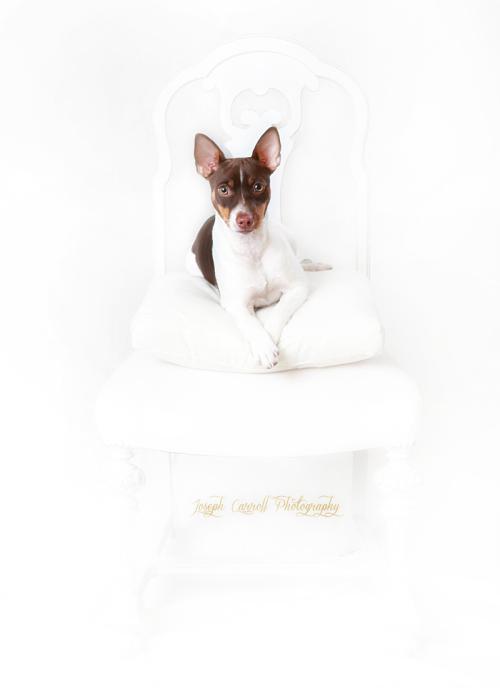 CAROL PISCIOTTA-JOSEHCARROLLPHOTOGRAPHY LITTLE DOGfb